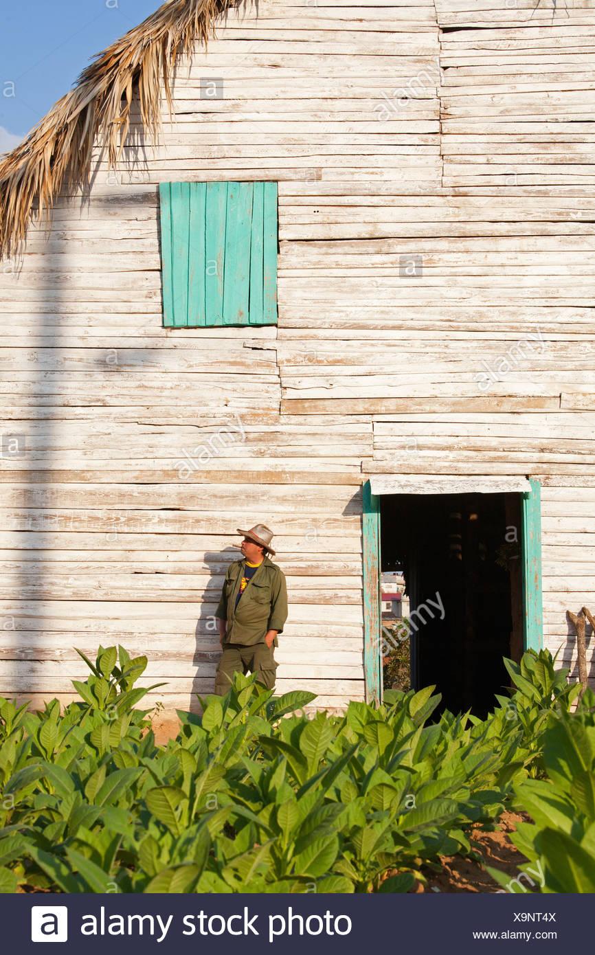 PINAR DEL RIO: TOBACCO FARM AND FARMER IN THE VINALES VALLEY - Stock Image