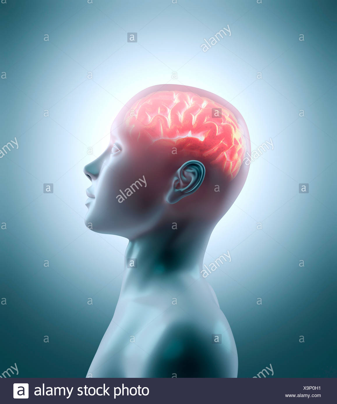Human brain, artwork Stock Photo