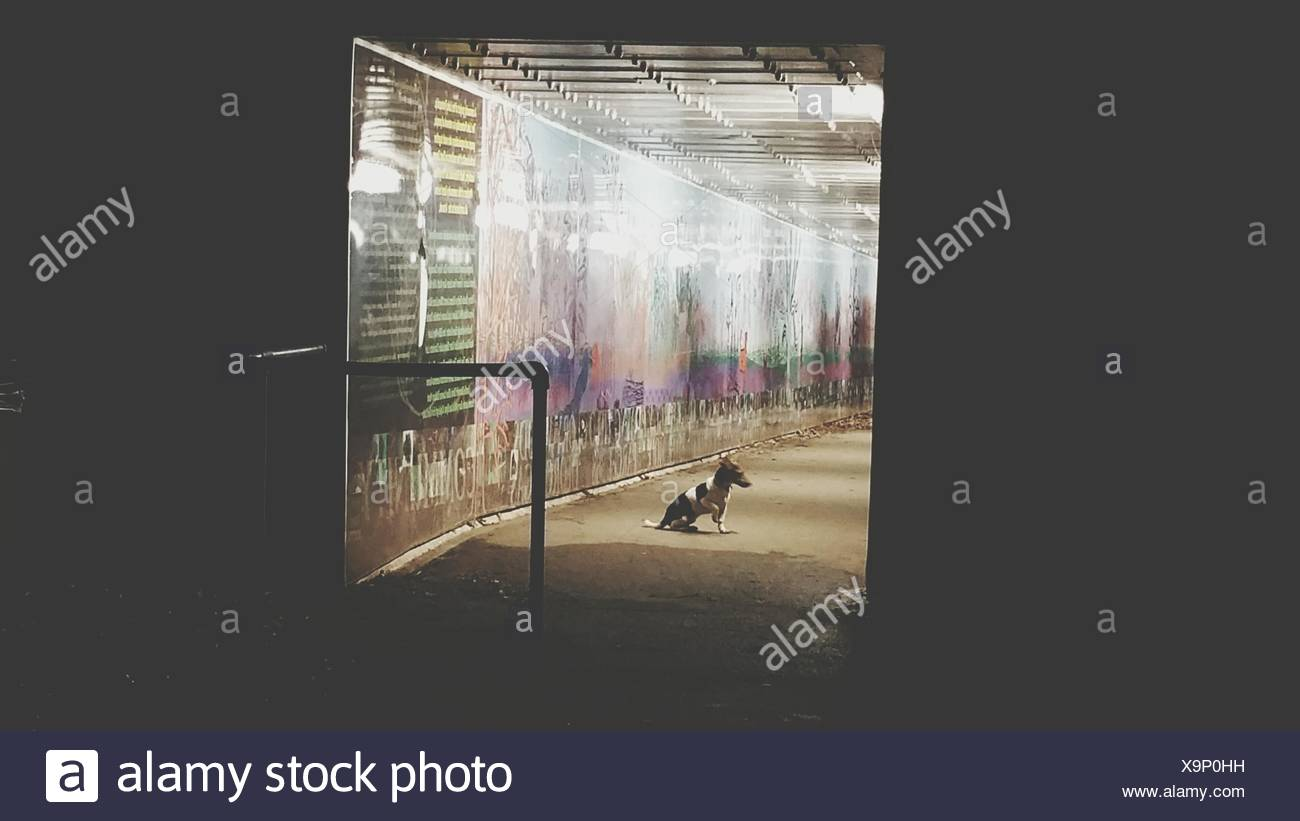 Dog Sitting In Illuminated Subway - Stock Image