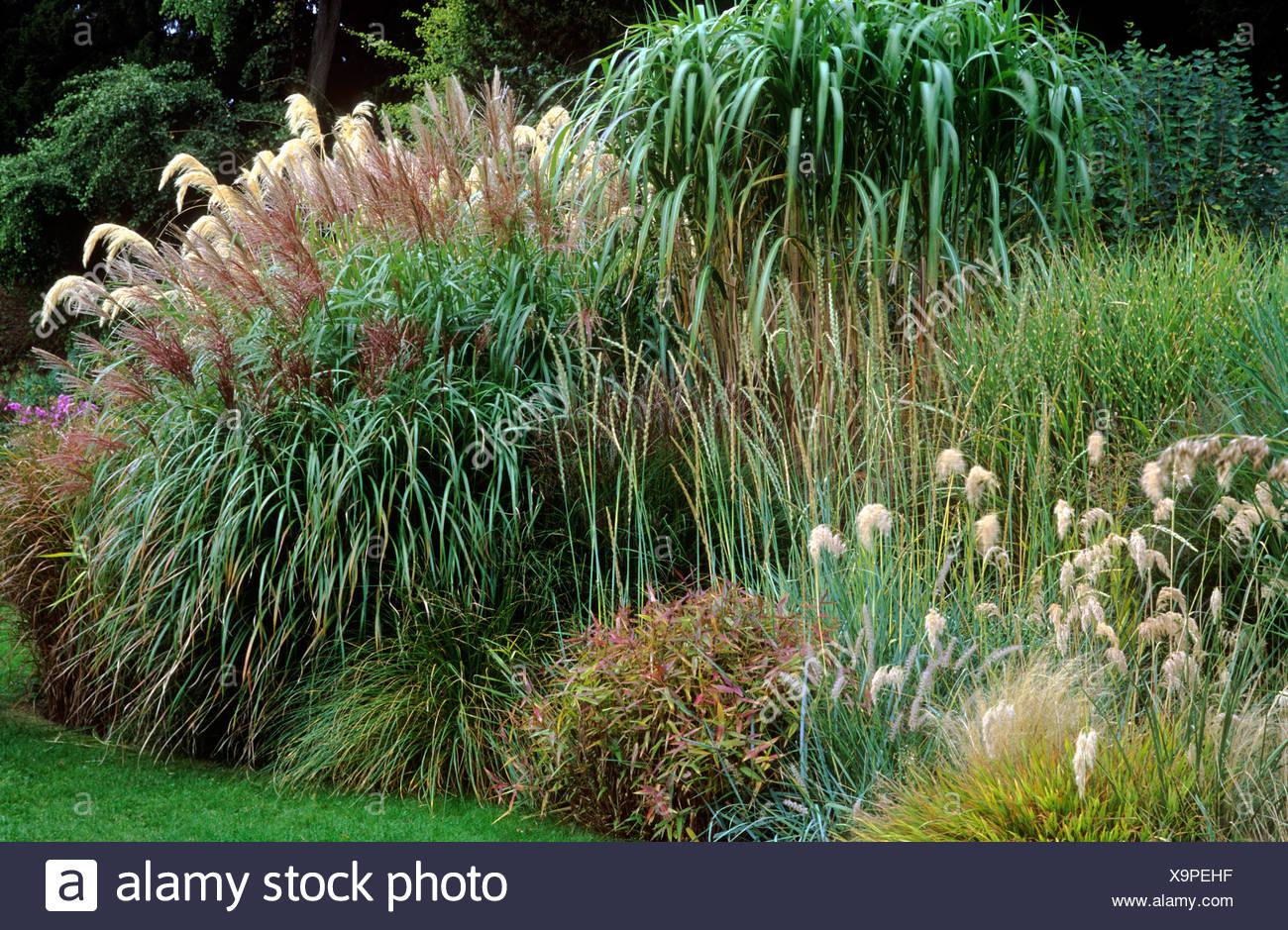 Border With Grasses Miscanthus Cortaderia Autumn Garden Gardens