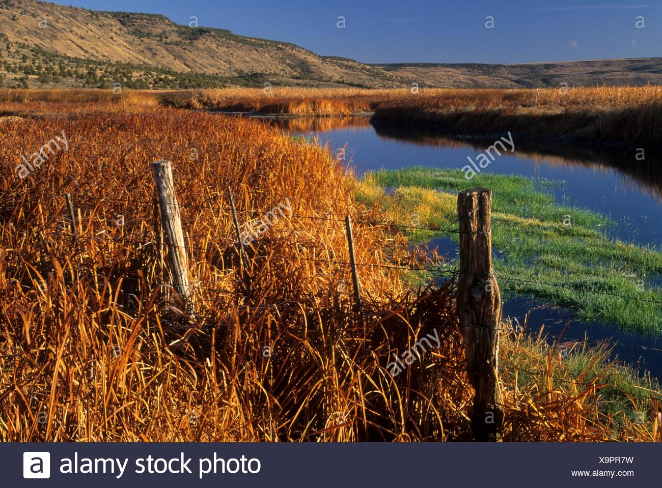 Wetland near Knox Pond, Malheur National Wildlife Refuge