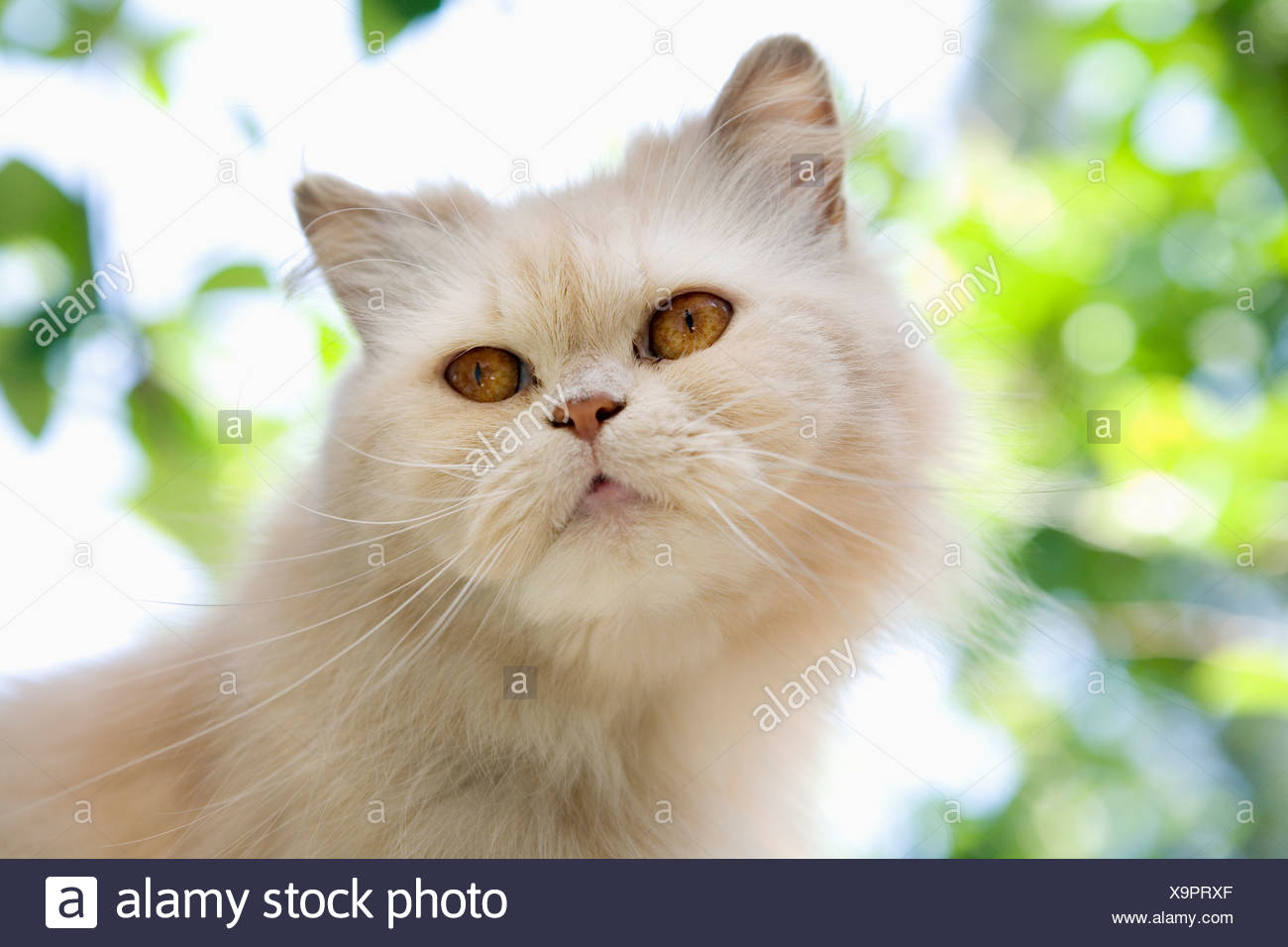 White cat outdoors - Stock Image