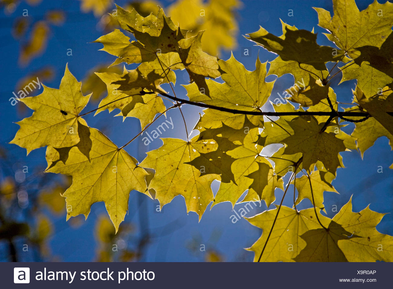 Herbst Bltter Stock Photos & Herbst Bltter Stock Images - Alamy