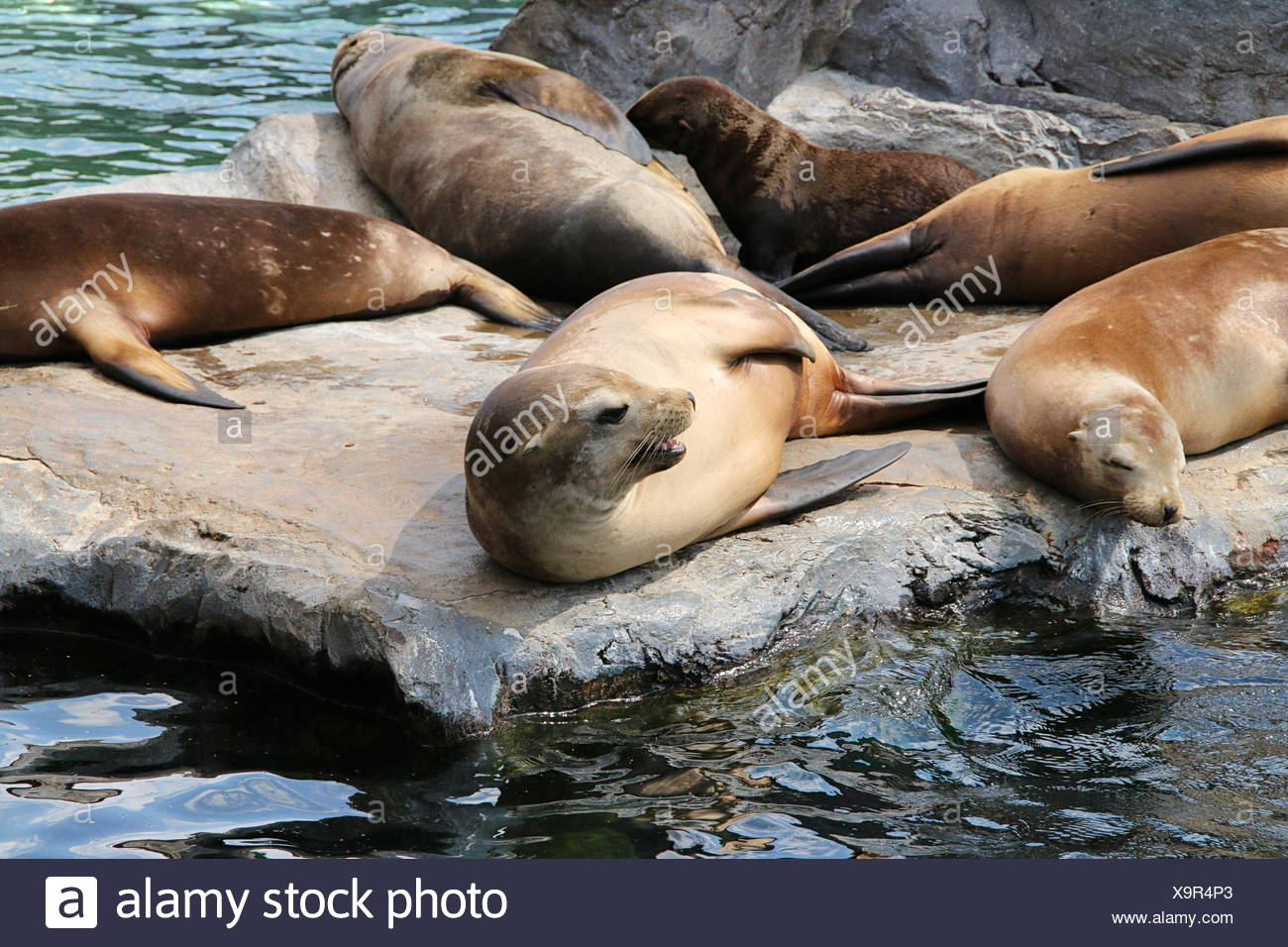 mammal conservation of nature Stock Photo