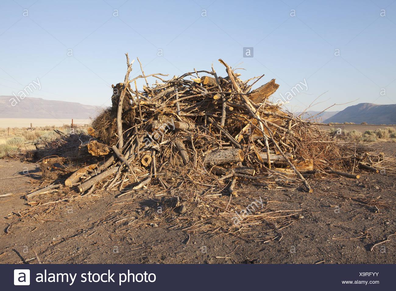 Nevada USA pile of wood debris and shavings - Stock Image