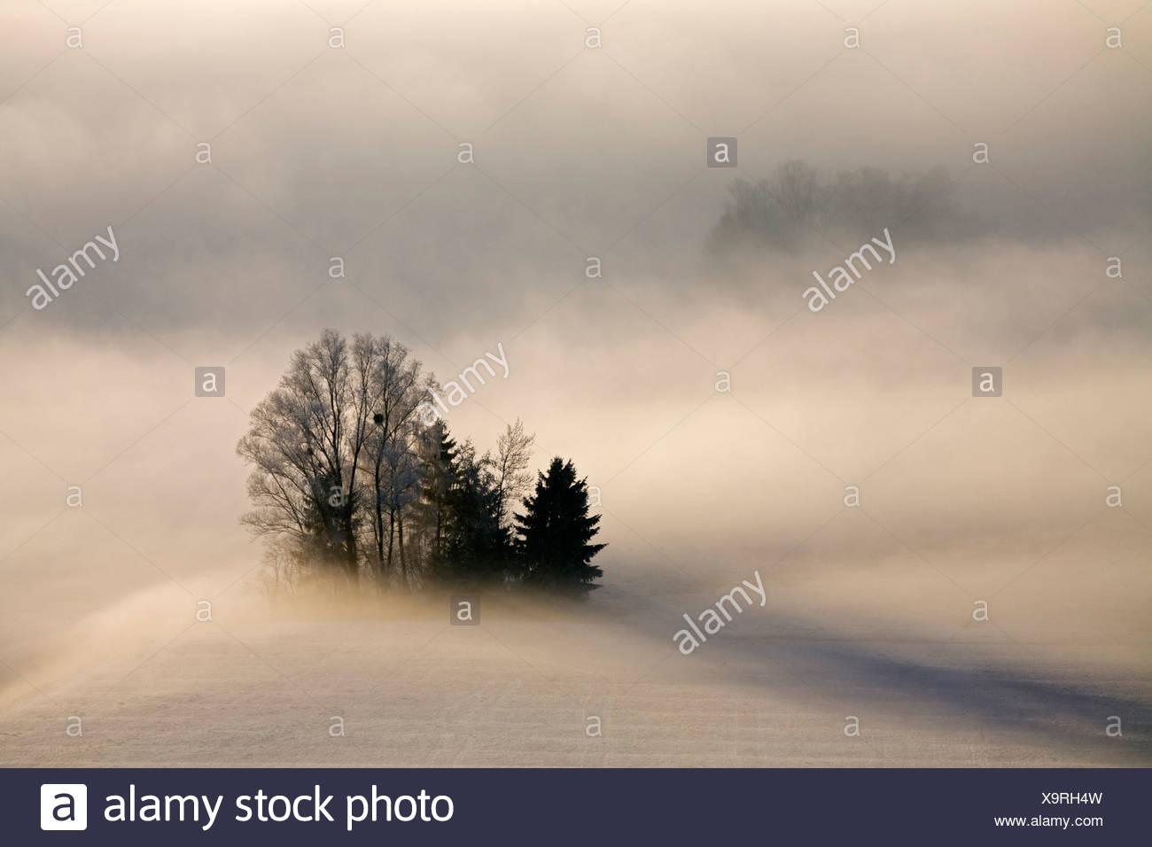 Germany, Bavaria, Murnau, Misty landscape - Stock Image
