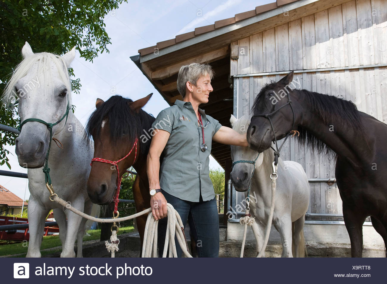 Veterinarian specialising in large animals with her four horses, Steinmaur, Zurich, Switzerland, Europe - Stock Image