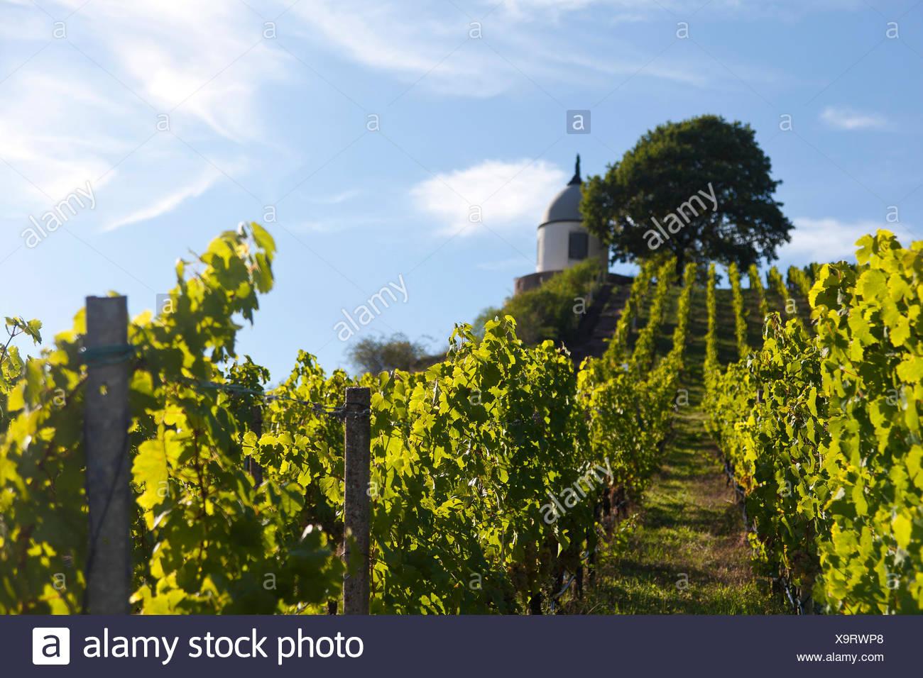 Vineyards of Wackerbarth Palace, view of Jacobstein, Radebeul, Saxon Elbeland, Saxony Stock Photo