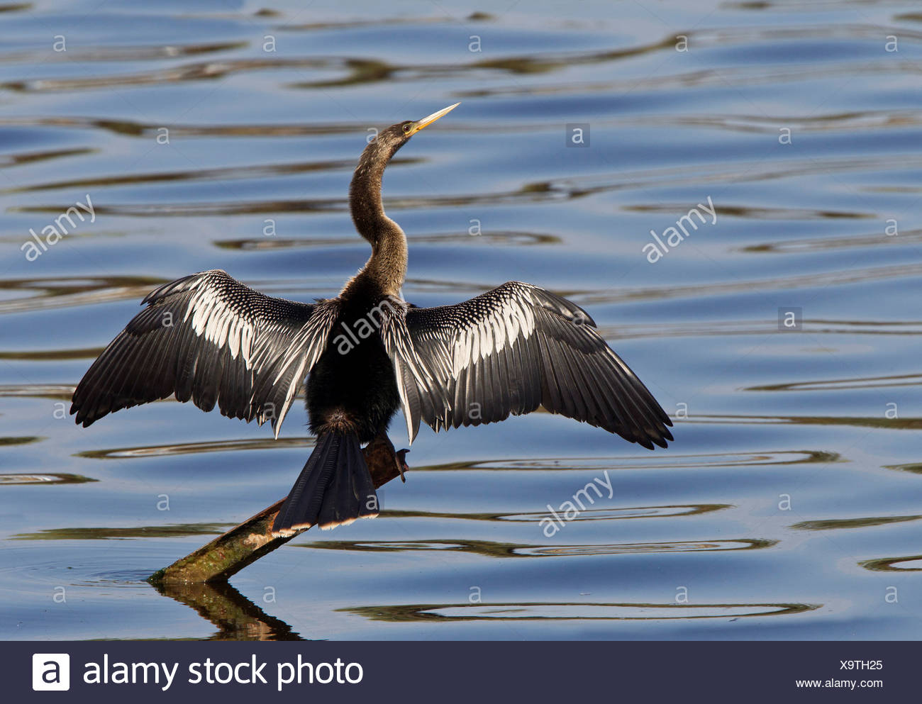 Metal Wings Stock Photos & Metal Wings Stock Images - Page 3 - Alamy