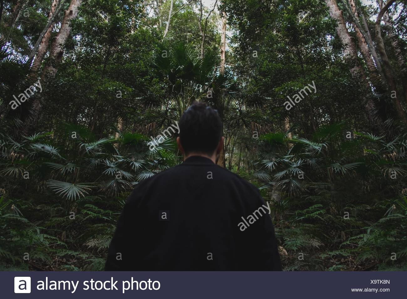 Rear View Of Man Standing By Trees In Forest - Stock Image