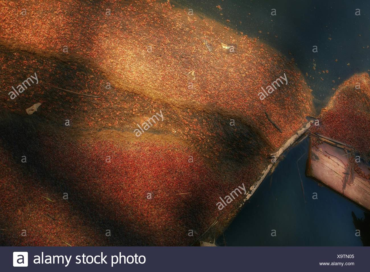 Messy Dirt Floating On Water - Stock Image