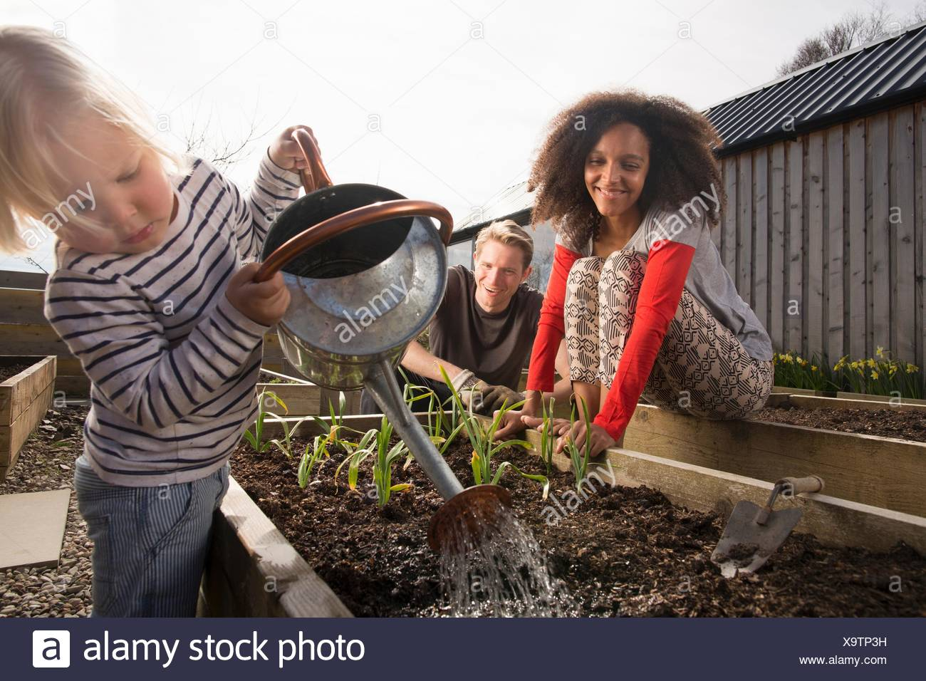 Son watering plants, parents watching - Stock Image