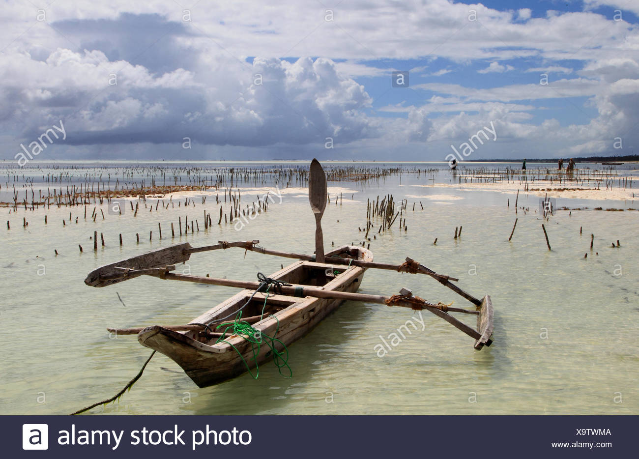 dhow and wooden piles of sea gardens at sandy beach, Tanzania, Sansibar - Stock Image