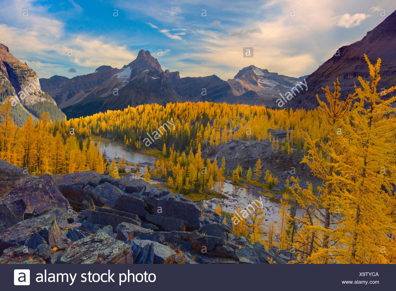 Canada, Alberta, Banff, National Park, Larches, Peaks, golden hour, sunset, dramatic light, fall colour, autumn, trees, forest, Stock Photo