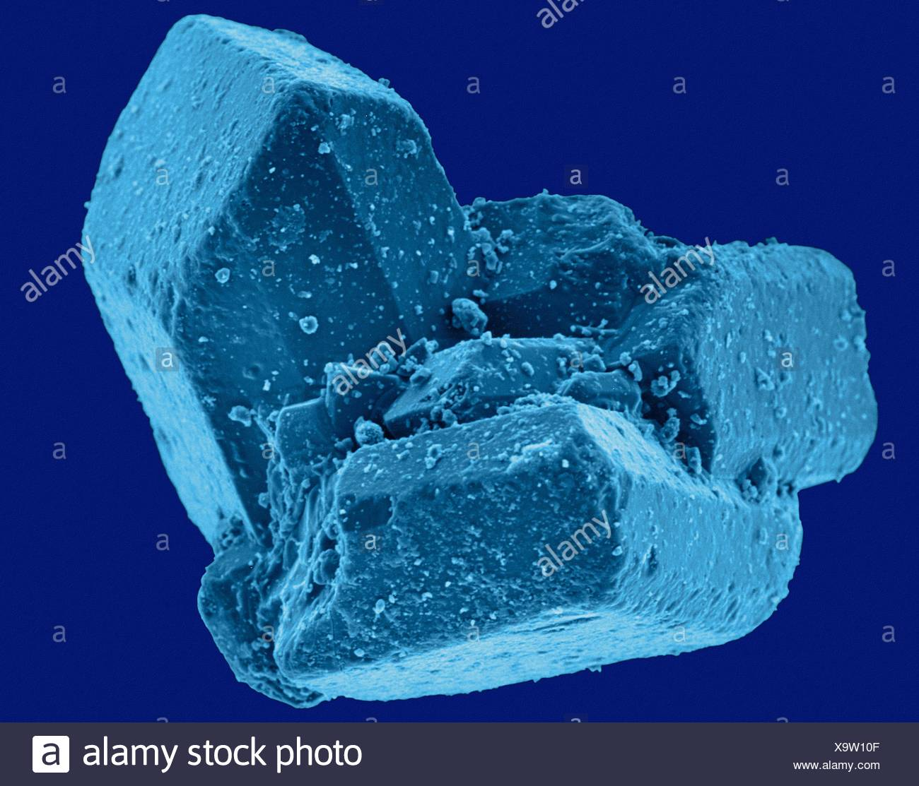 Coloured scanning electron micrograph (SEM) of Table sugar (sucrose) crystals. Sucrose, or common table sugar (also called saccharose), is a disaccharide that consists of two component monosaccharidesglucose and fructose. It is best known for its role in human nutrition and is formed by plants but not by higher organisms. It is commonly used as a sweetener. Magnification: x61 when shortest axis printed at 25 millimetres. - Stock Image