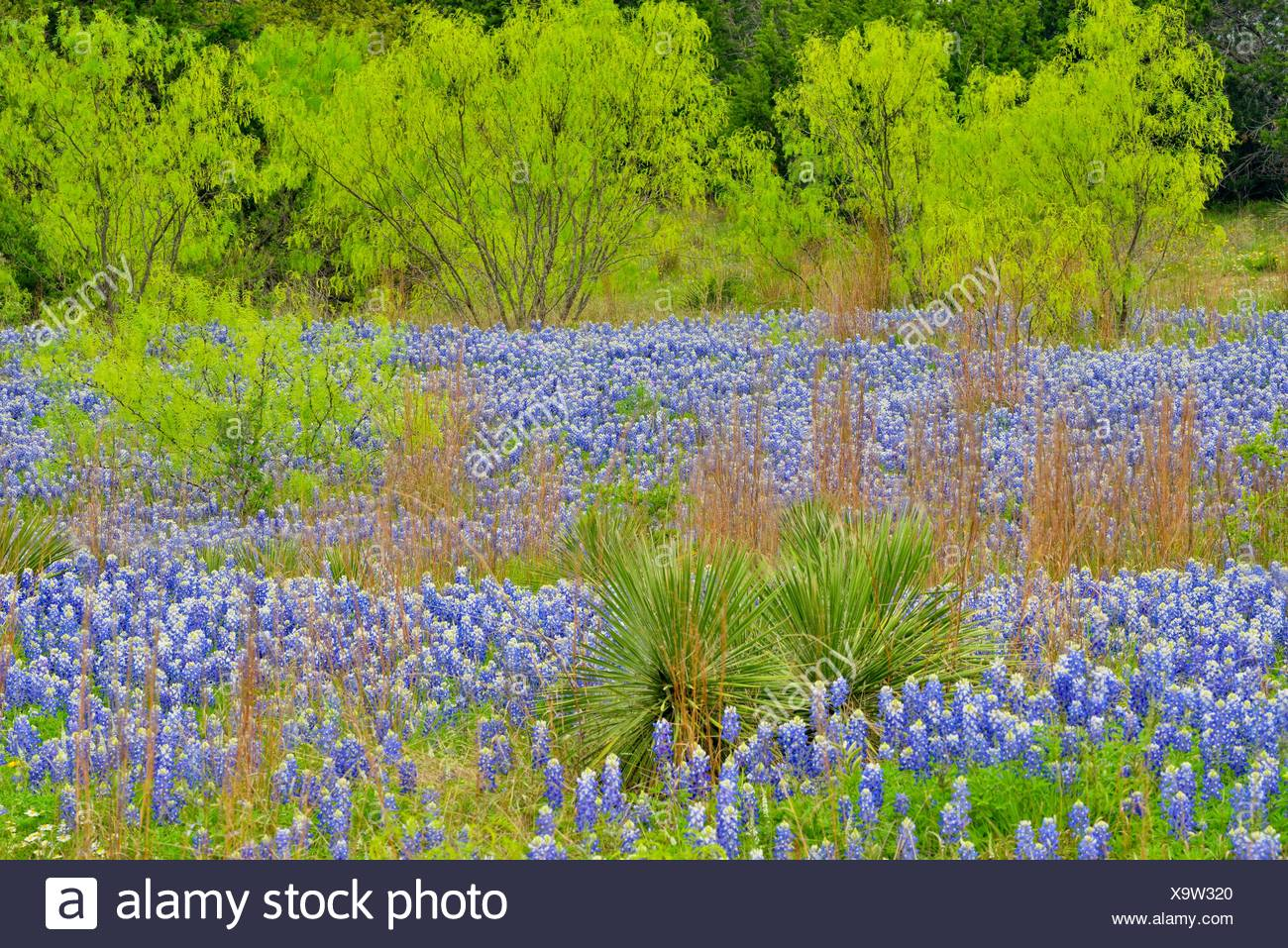 Blanco County Stock Photos Amp Blanco County Stock Images