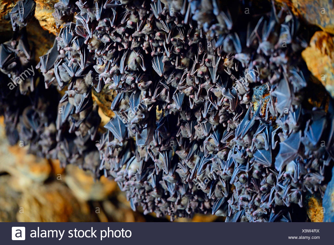 Hundreds Of Bats In A Cave Directly Above The Altar Of The