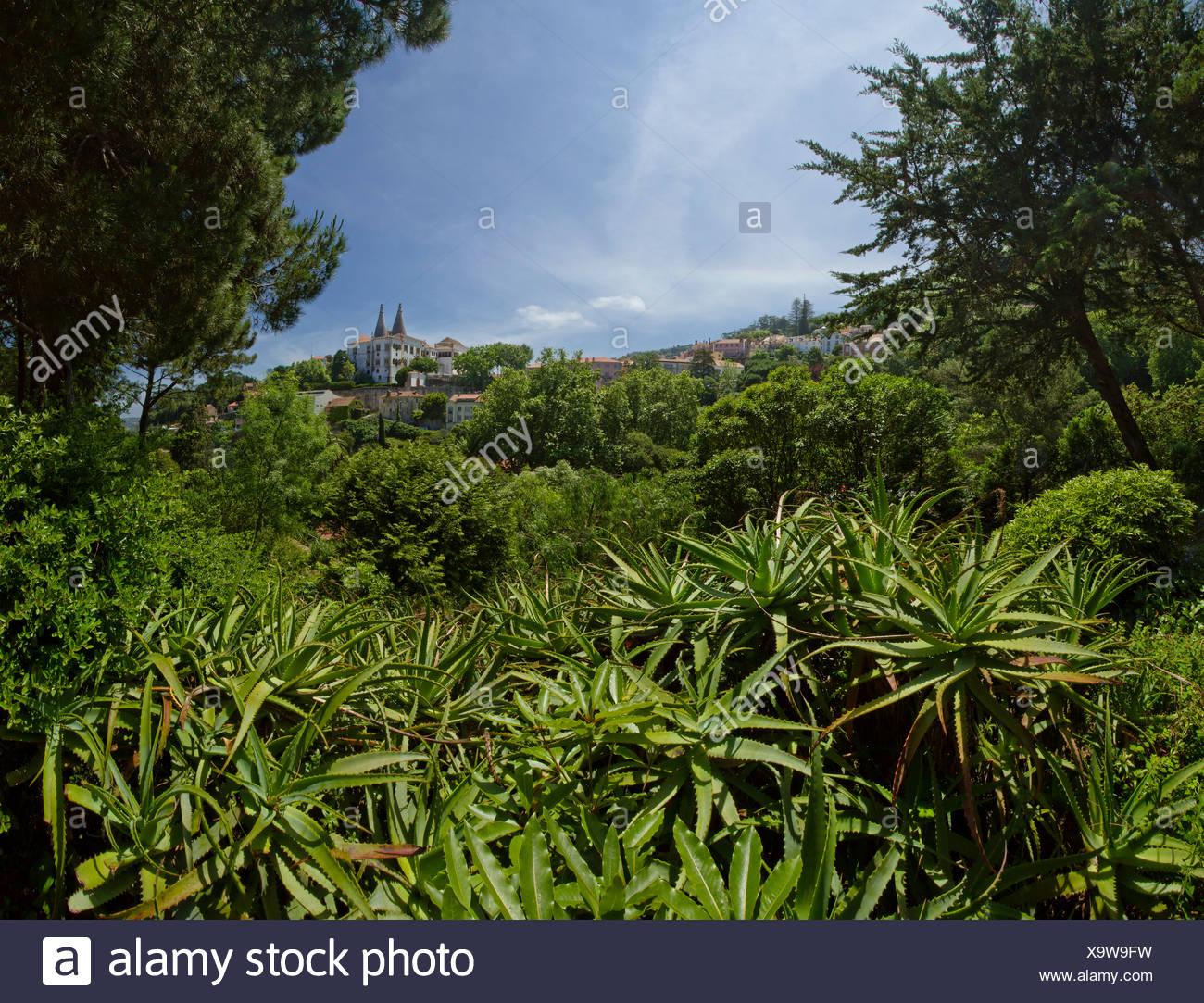 Portugal, Europe, Estremadura, spring, Palacio Nacional, Sintra, - Stock Image