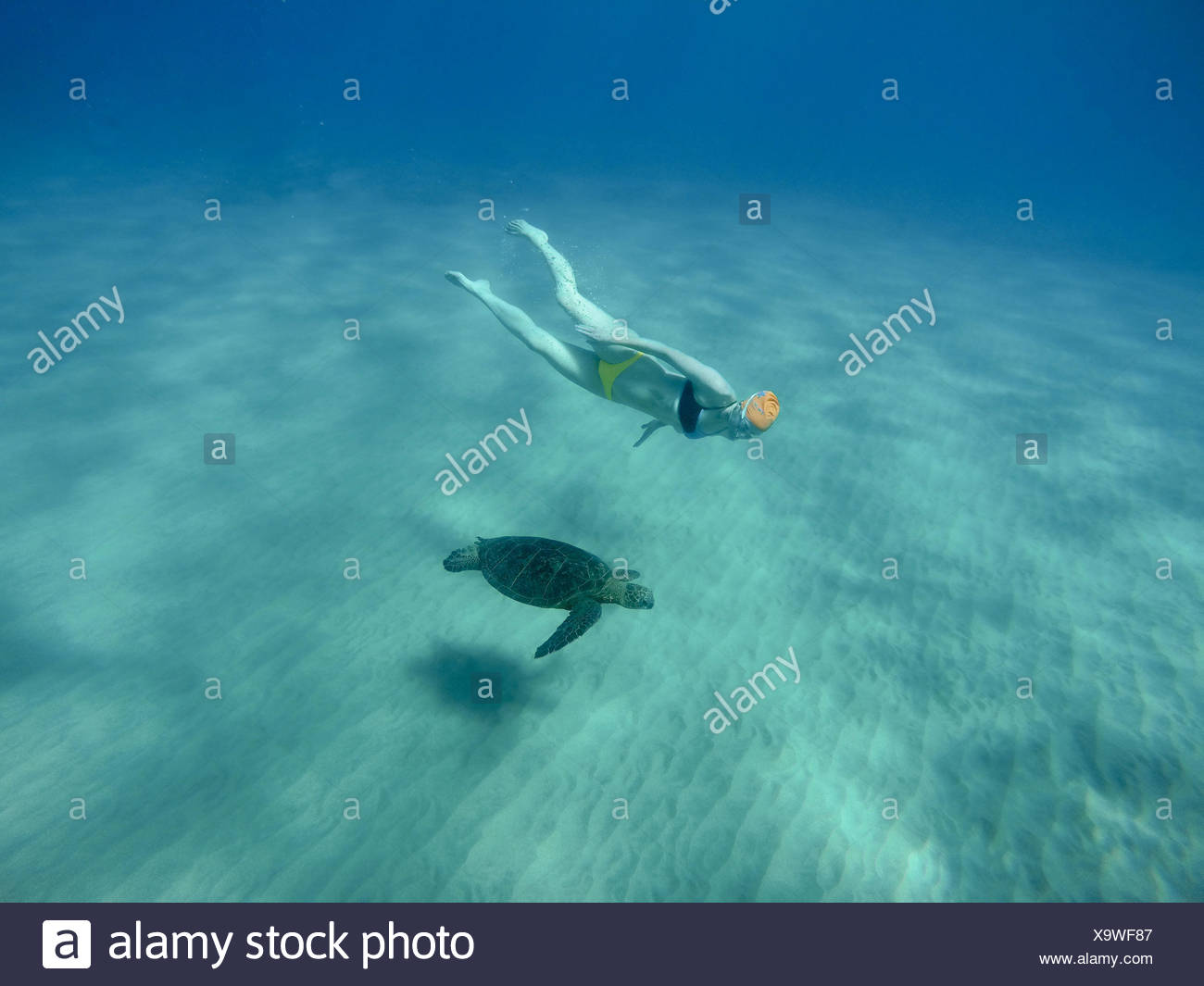 A woman in a yellow and blue bikini swims underwater with a pacific green turtle. - Stock Image