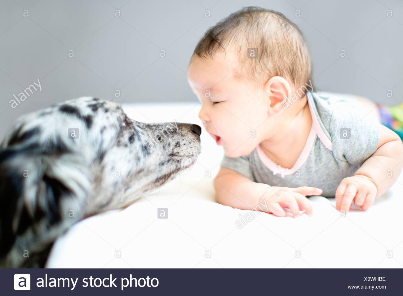 Baby girl face to face with pet dog - Stock Image
