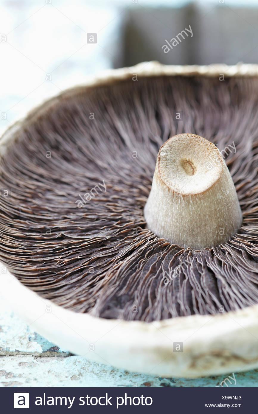 Underside Of Wild Mushroom On Wooden Surface - Stock Image