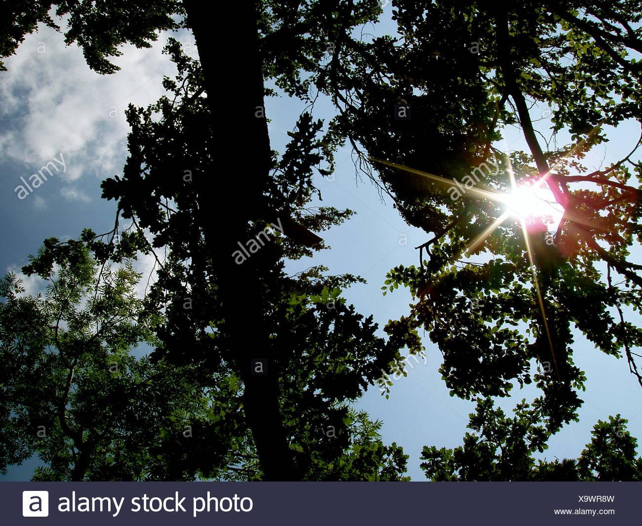sky,sun,tree - Stock Image
