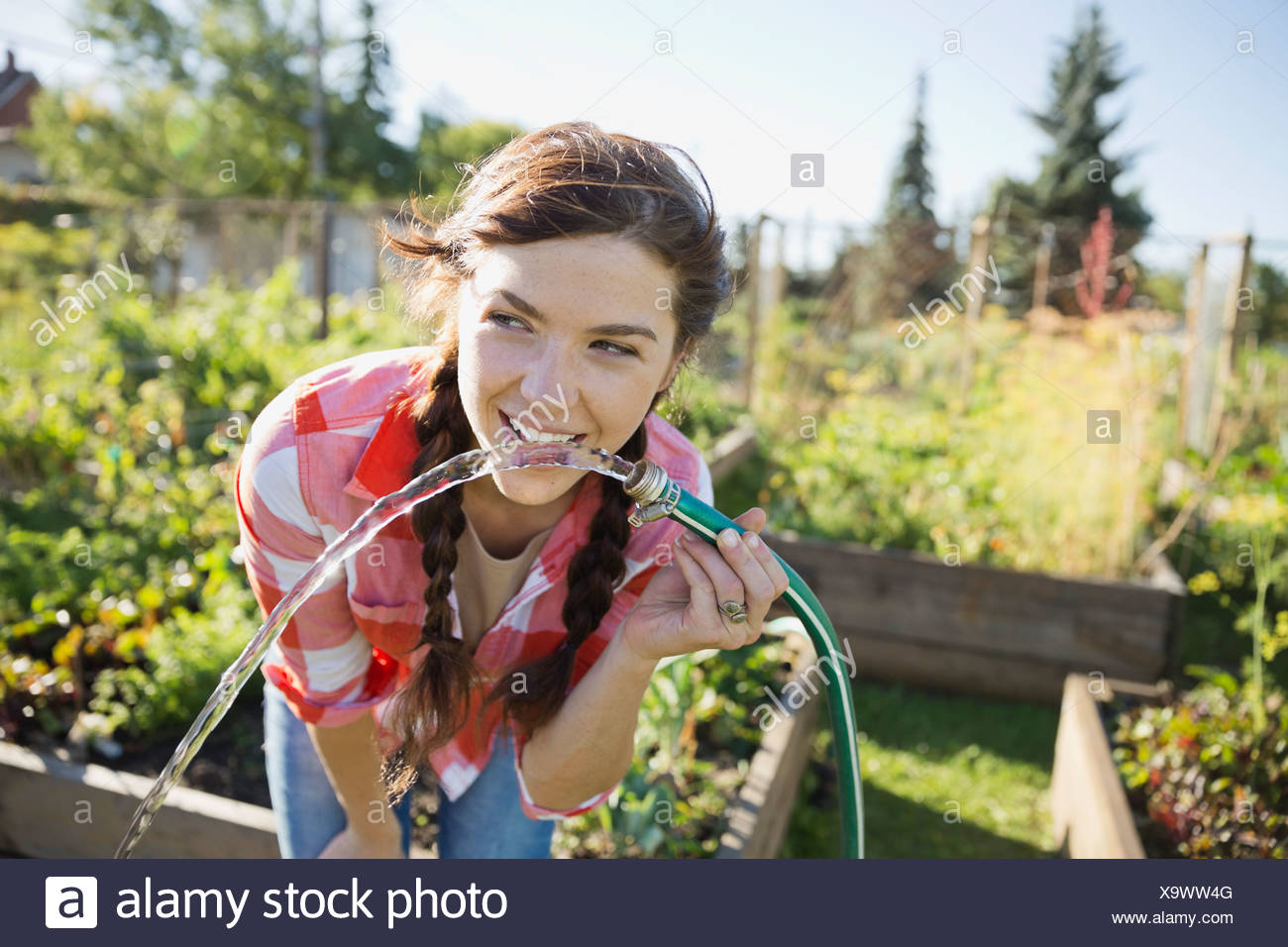 Woman drinking water from garden hose - Stock Image