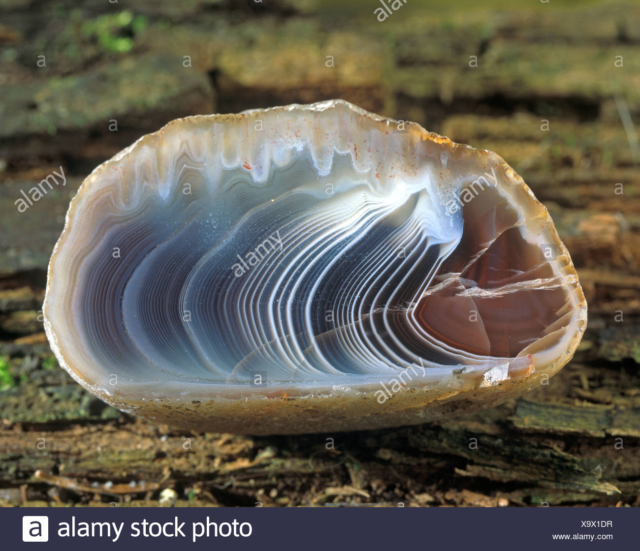 Agate, cut, from Botswana - Stock Image