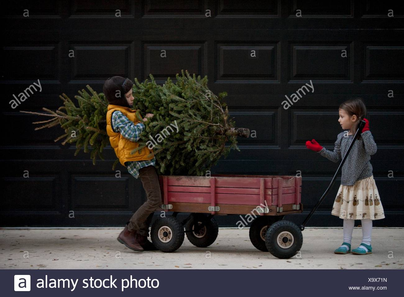 Girl and boy loading cart with christmas tree - Stock Image