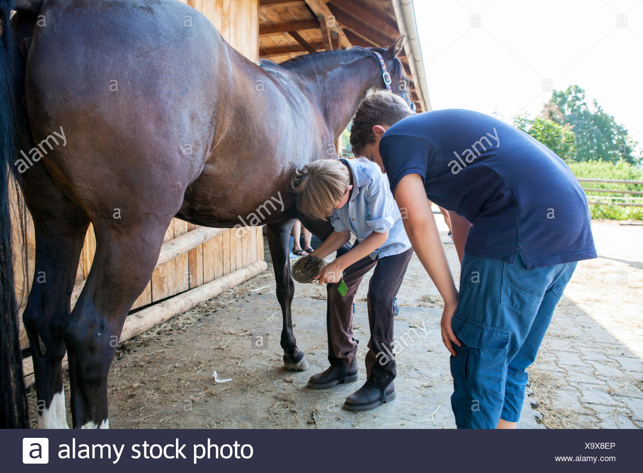 Boys cleaning hoof of a horse - Stock Image