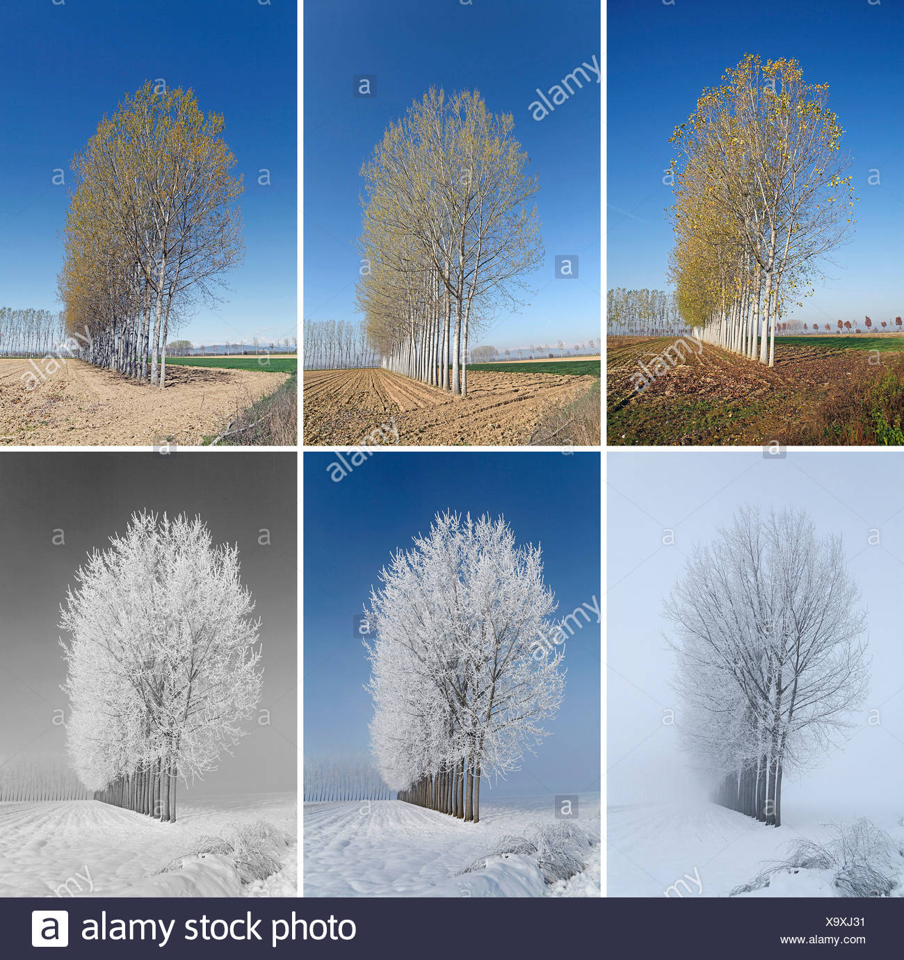 Italy Torino POIRINO picture series seasons trees pictures 6 spring summer autumn winter - Stock Image