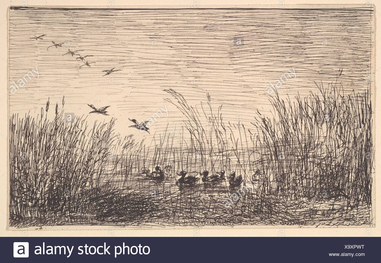 Ducks in the Marshes. Artist: Charles-François Daubigny (French, Paris 1817-1878 Paris); Date: 1862; Medium: Cliché-verre; Dimensions: sheet: 4 7/8 x - Stock Image