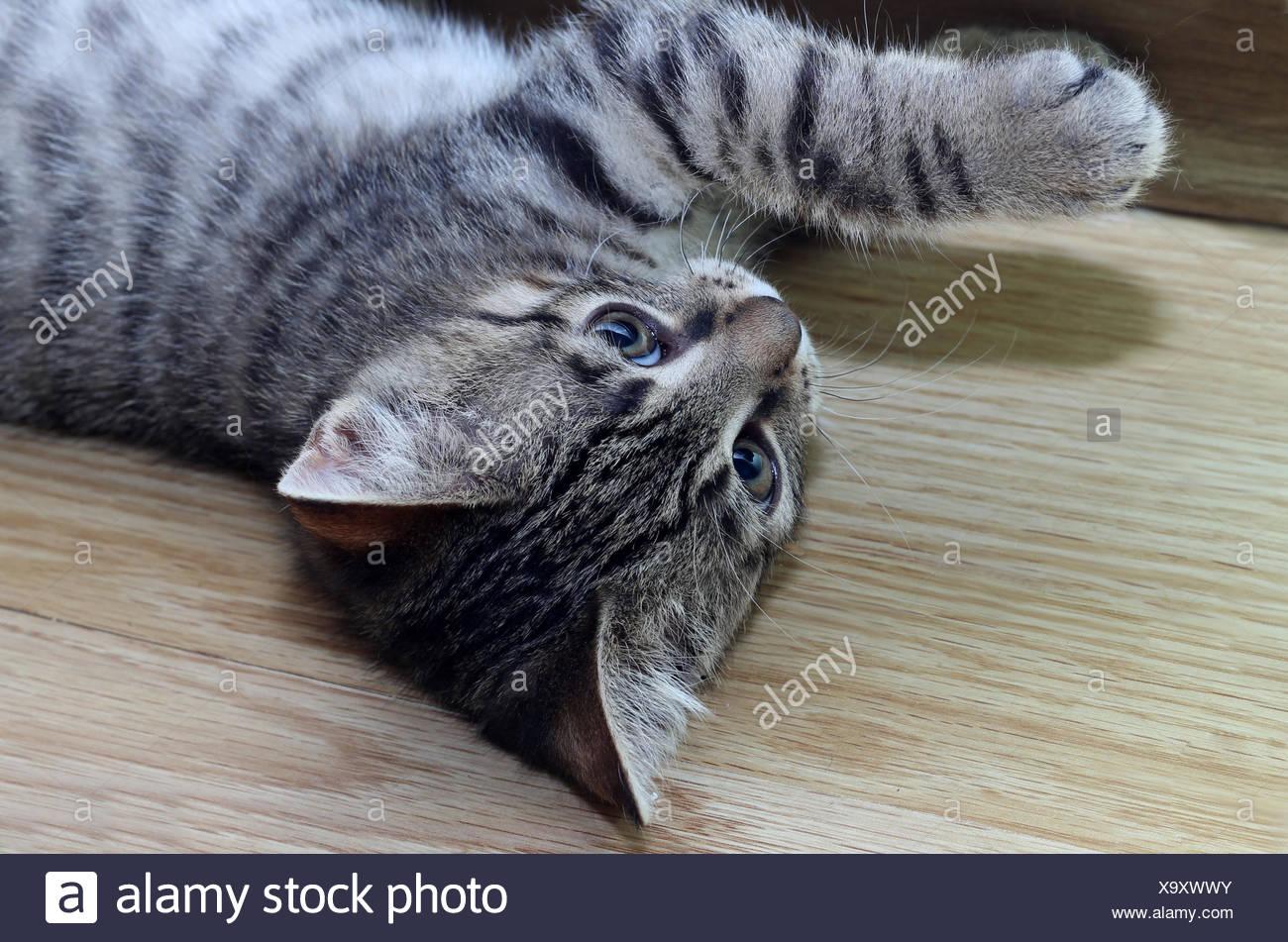Kitten lying Stock Photo