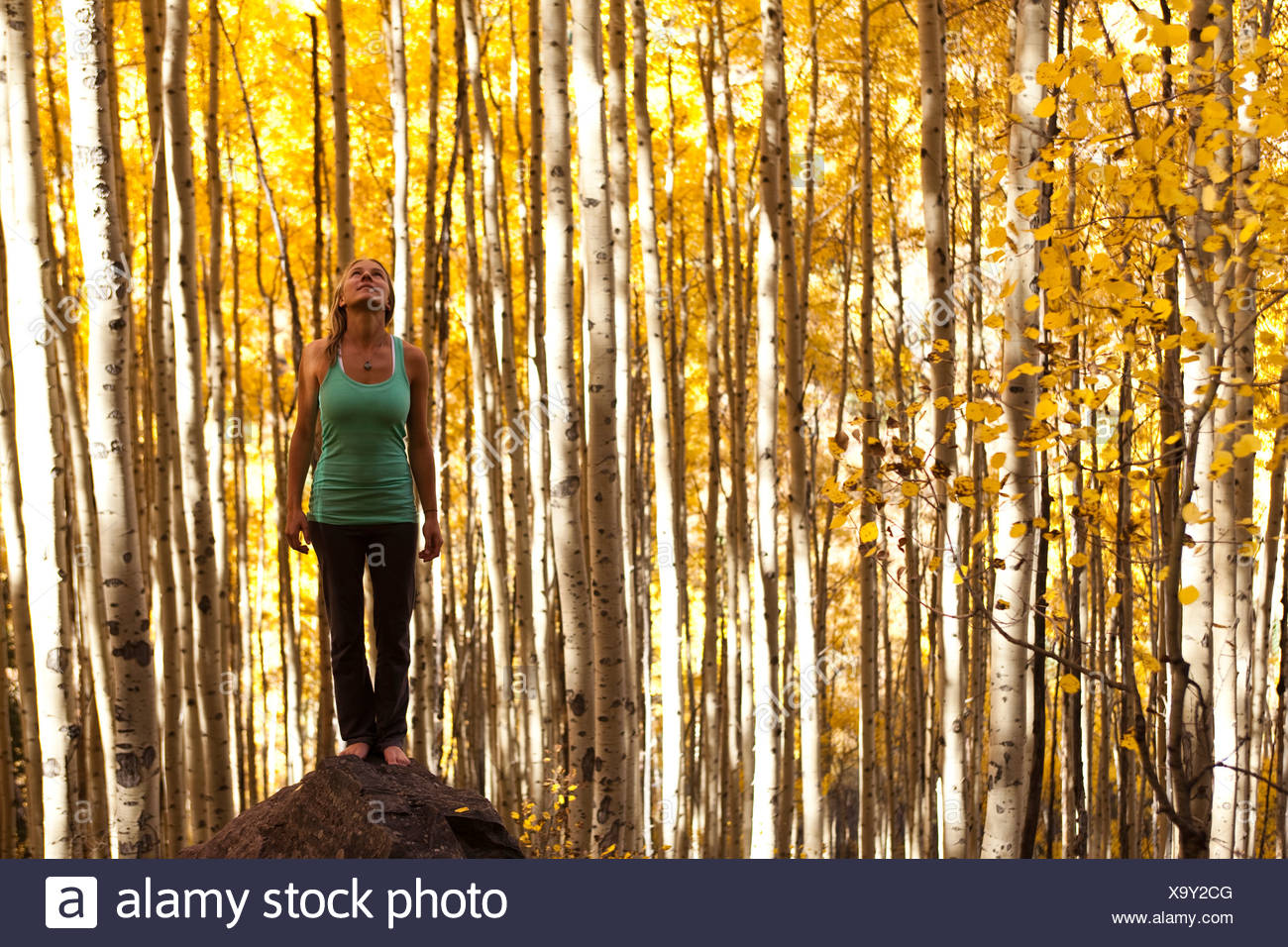 A young woman standing peacefully on a rock in the midst of a sea of gold aspen leaves. - Stock Image