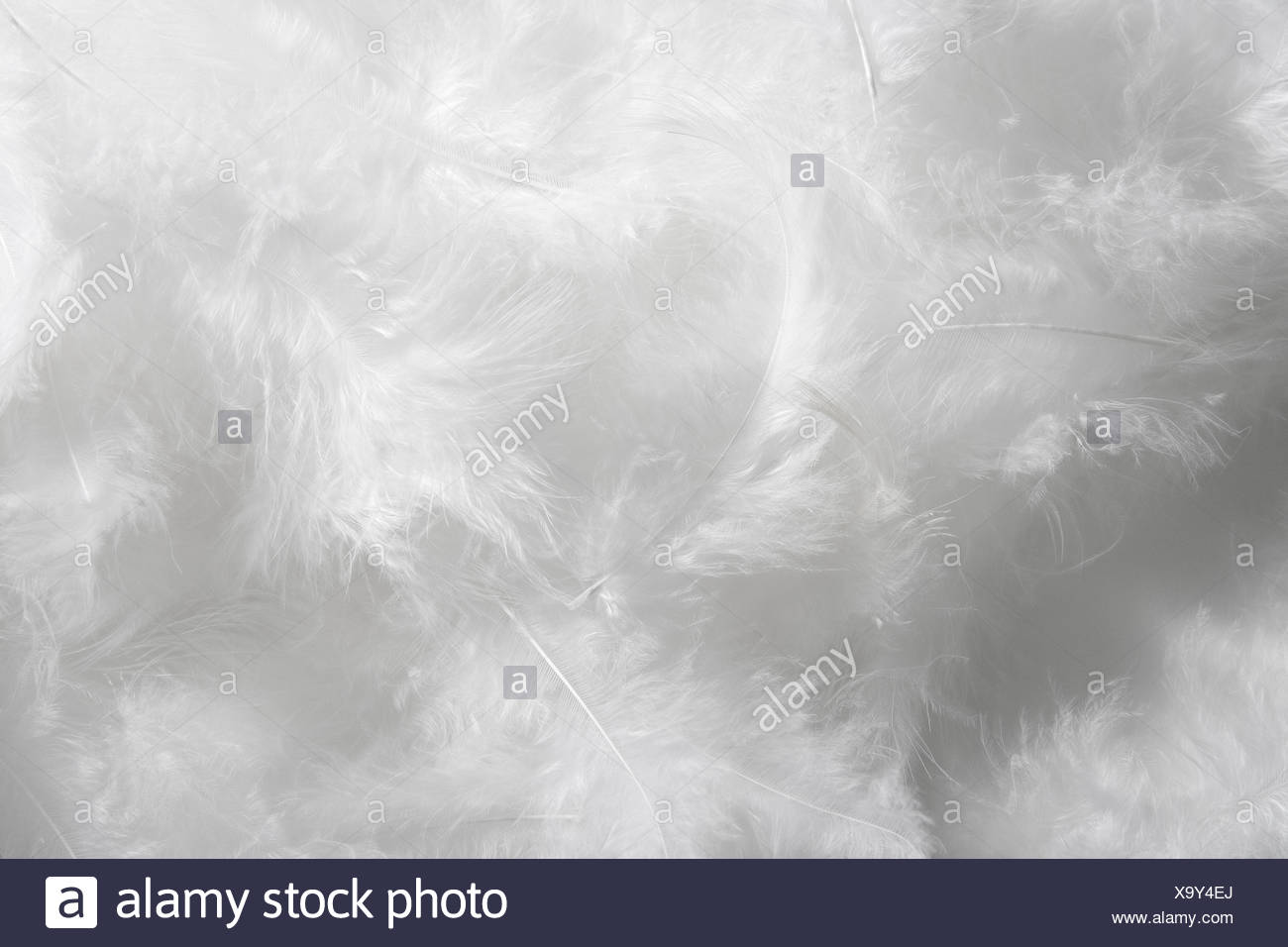 close-up of white feathers - Stock Image
