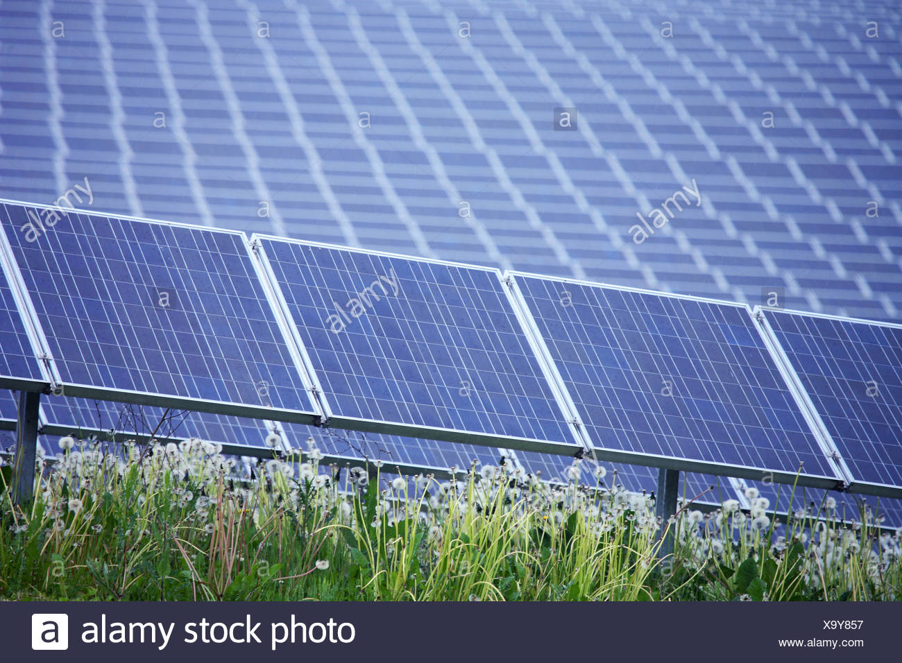 Solar panels in field - Stock Image