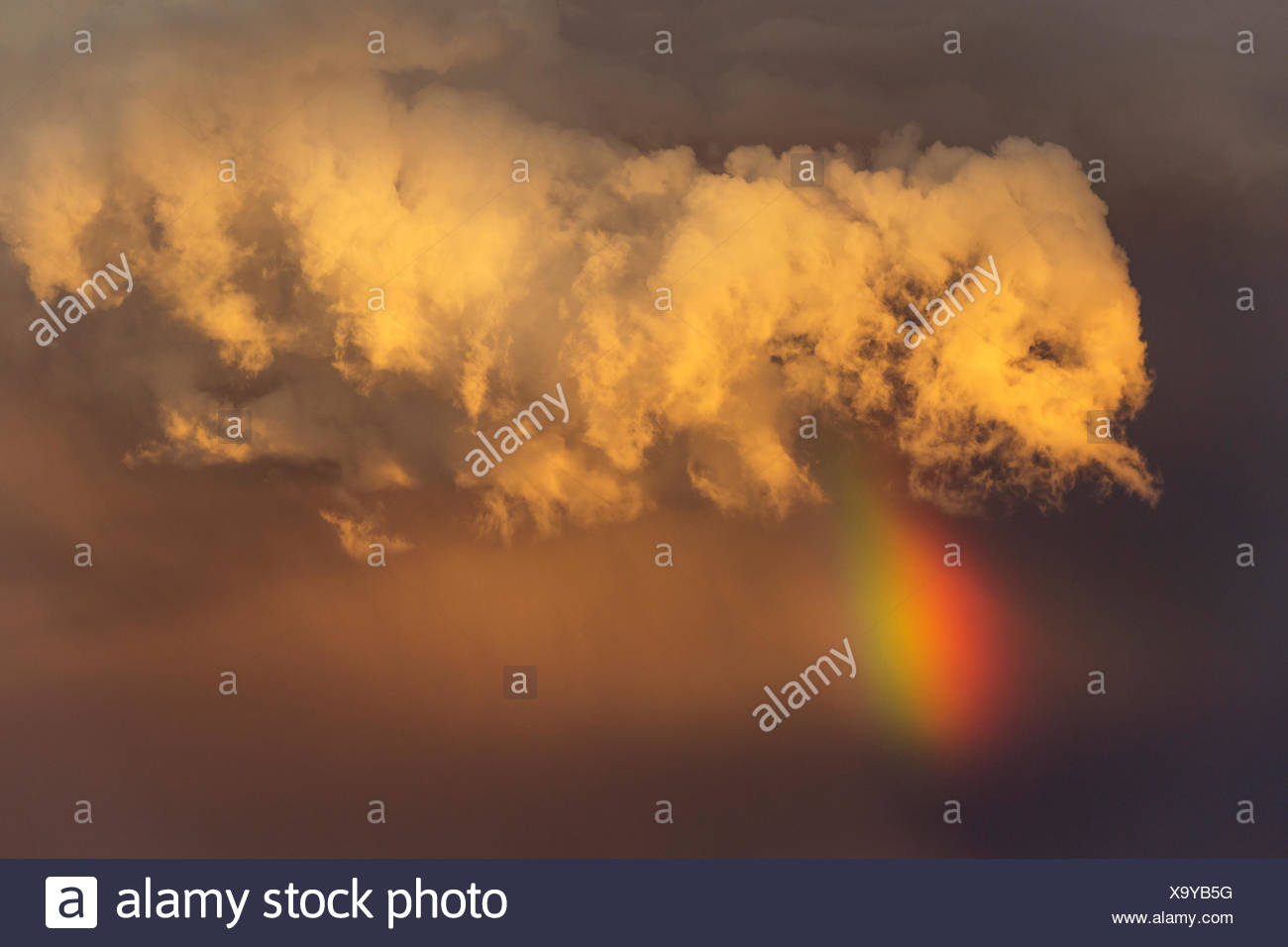 Evening thunderstorm with Cumulonimbus cloud and rainbow above a sand dune, rainy season, Kalahari Desert - Stock Image