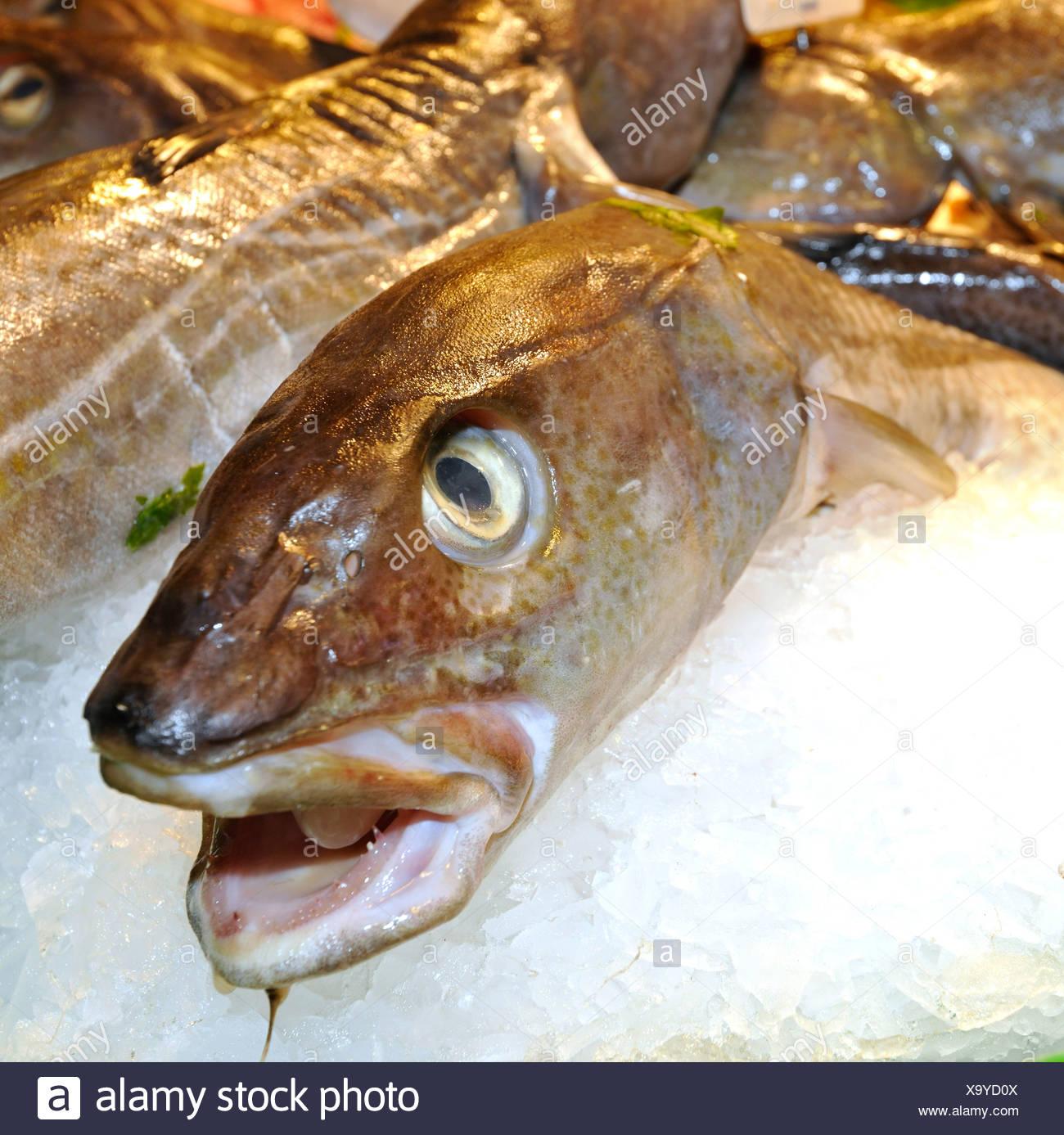 Various fresh fish, market halls, Mercat de la Boqueria, Barcelona, Las Ramblas, Catalunya, Spain, Europe - Stock Image