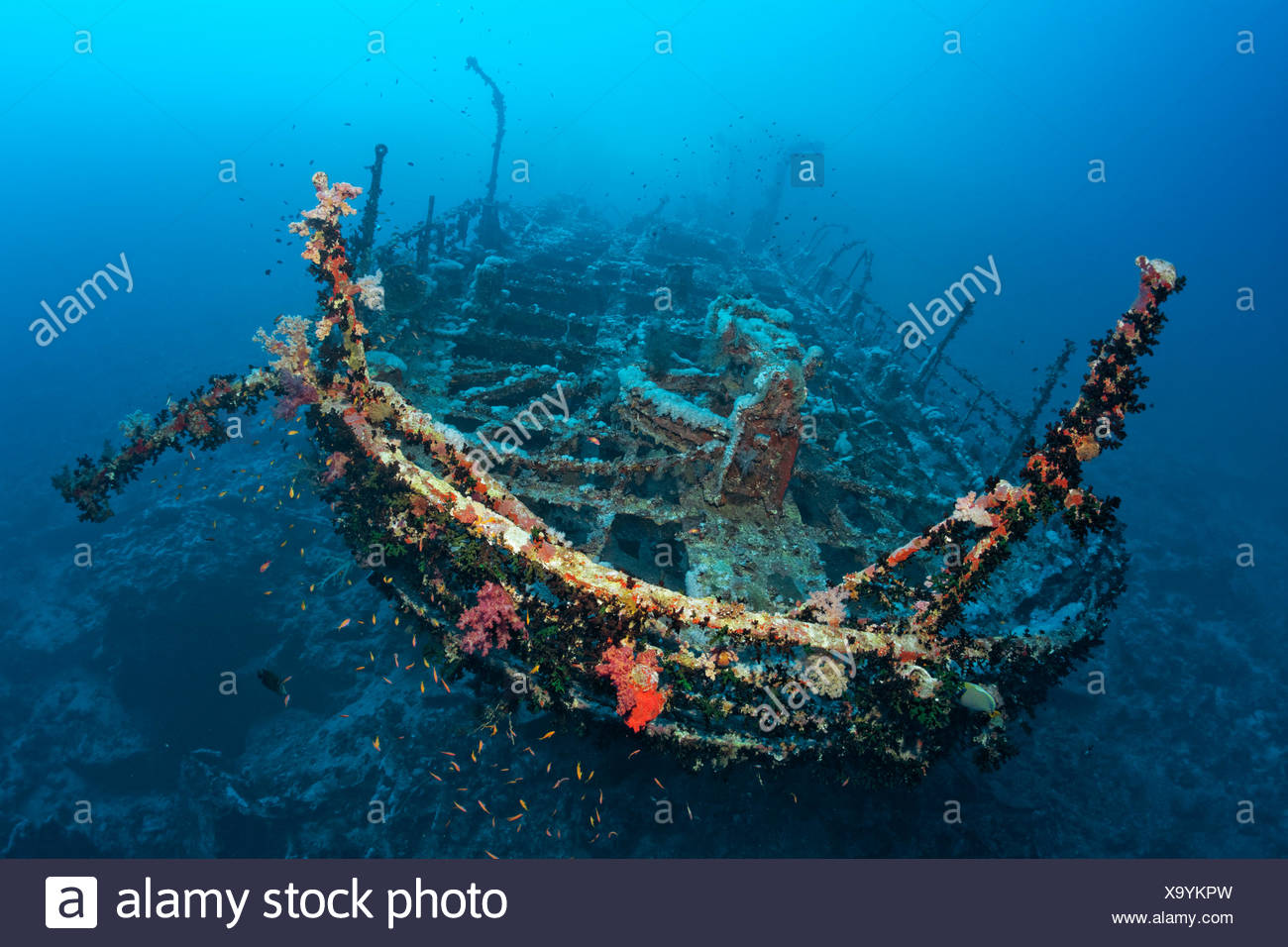 Aida shipwreck, Brother Islands, Egypt - Stock Image