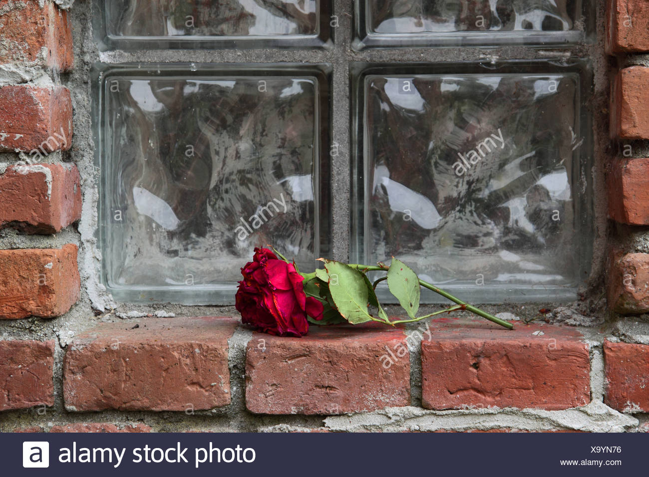forgotten love - Stock Image