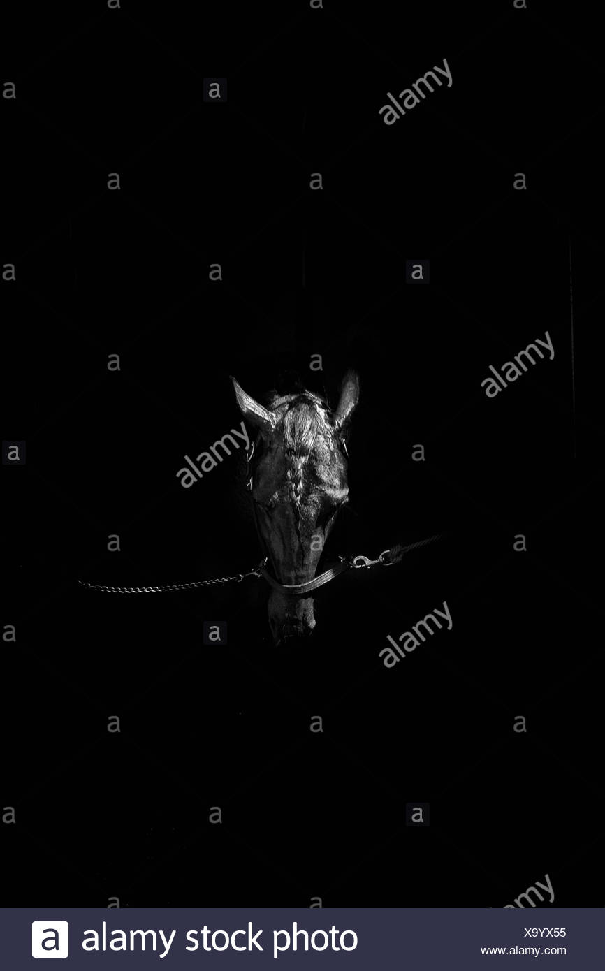 Horse In Dark Stable - Stock Image