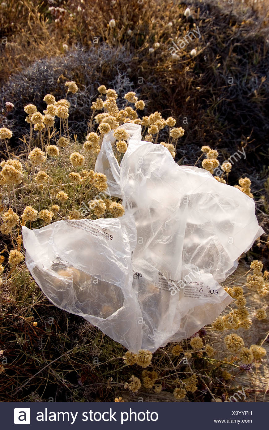 Plastic bag caught on a bush and blowing in the wind - Stock Image