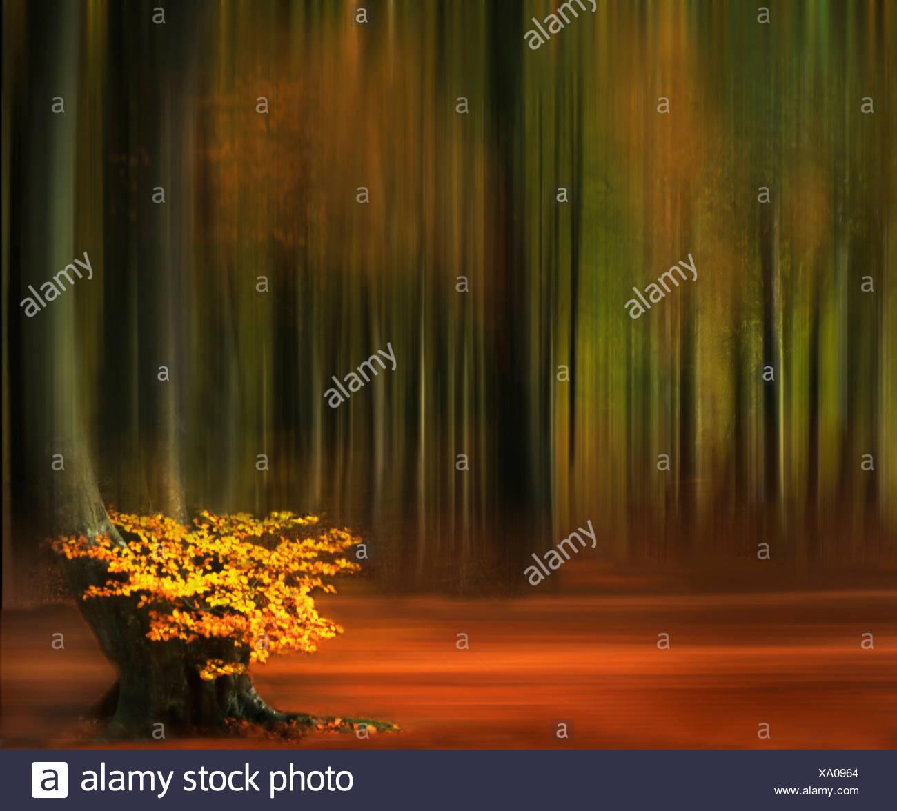 Beechwood in Autumn - Stock Image