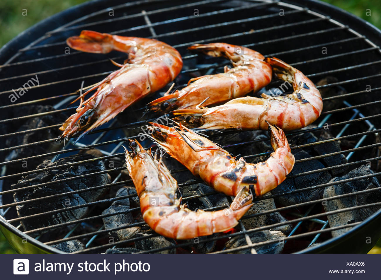 Grilled king size Prawns on grill BBQ background - Stock Image