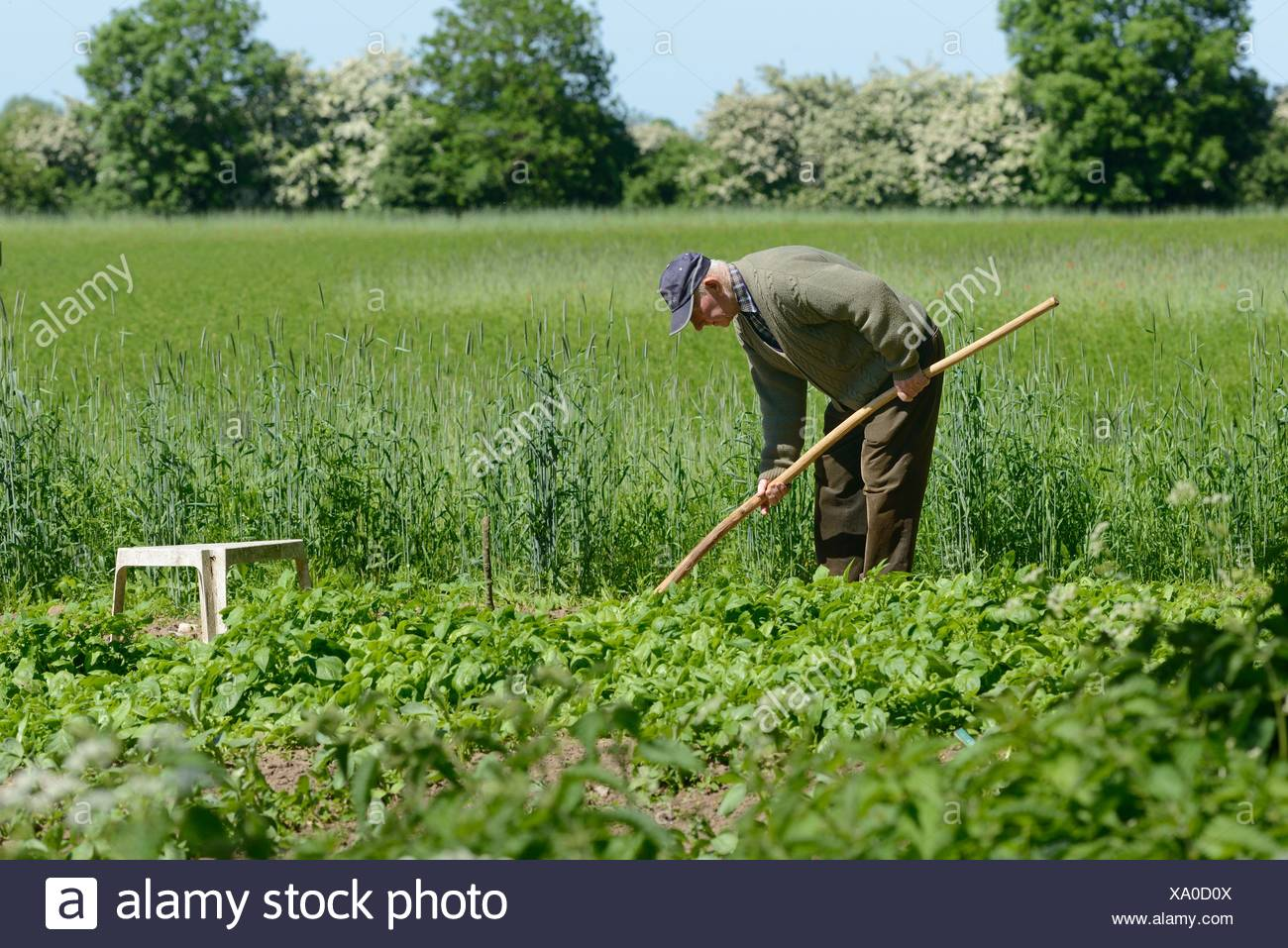Farmer is working in his kitchen garden - Stock Image