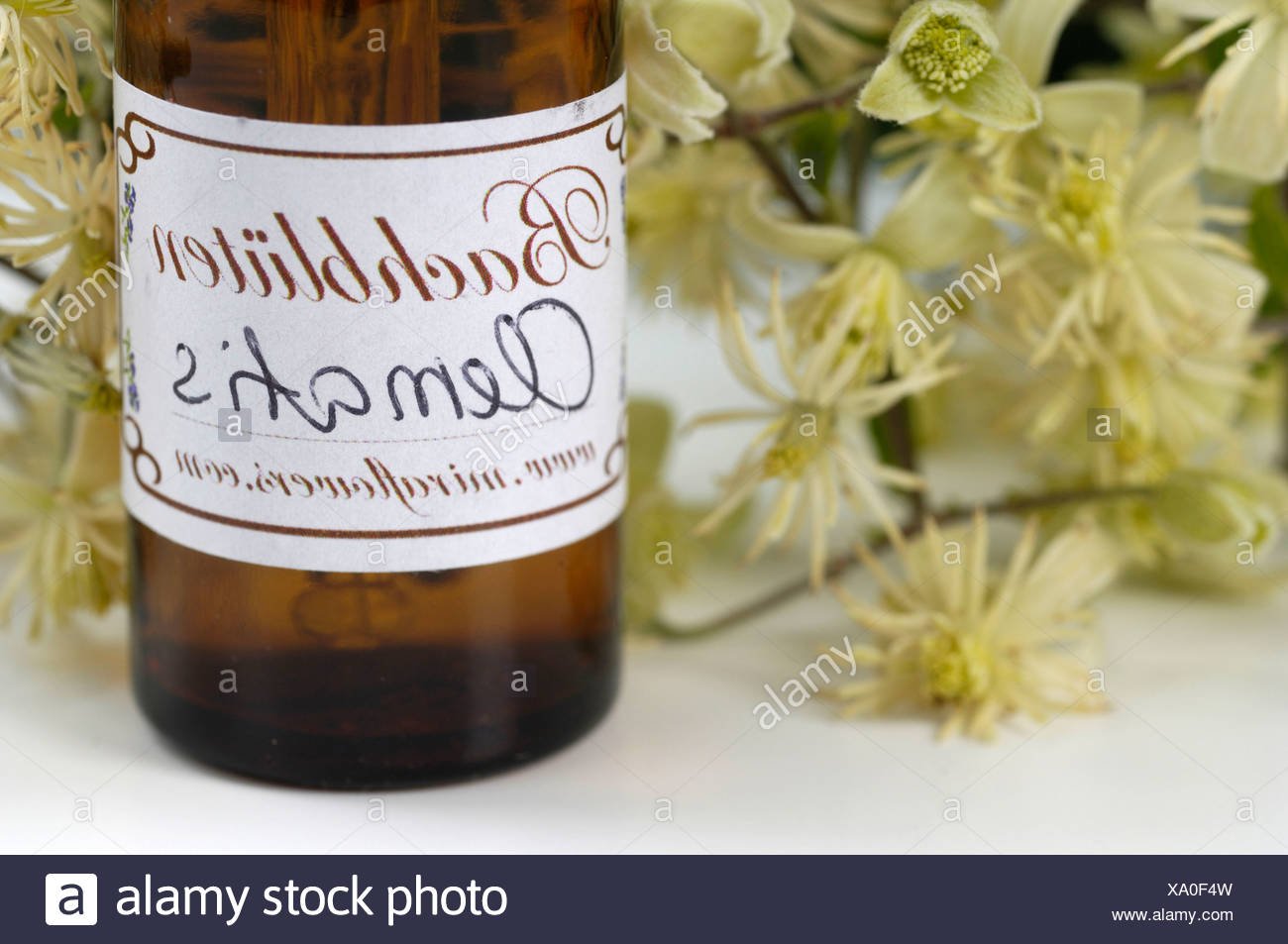 Bach Flower Stock Remedy - Stock Image