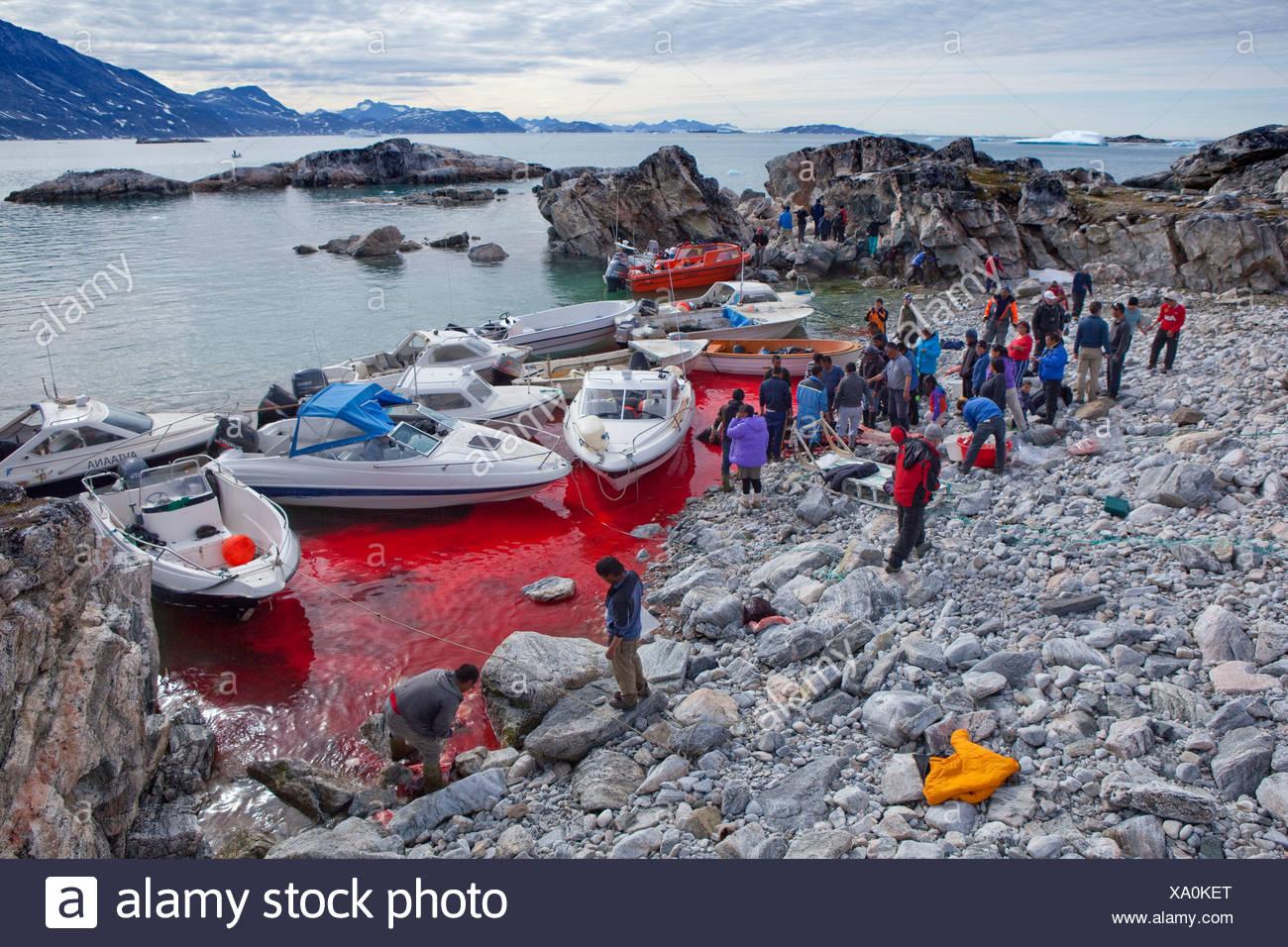 Inuit, whaling, Sermiligaaq, Greenland, East Greenland, ship, boat, ships, boats, blood, Sermiligaaq, - Stock Image