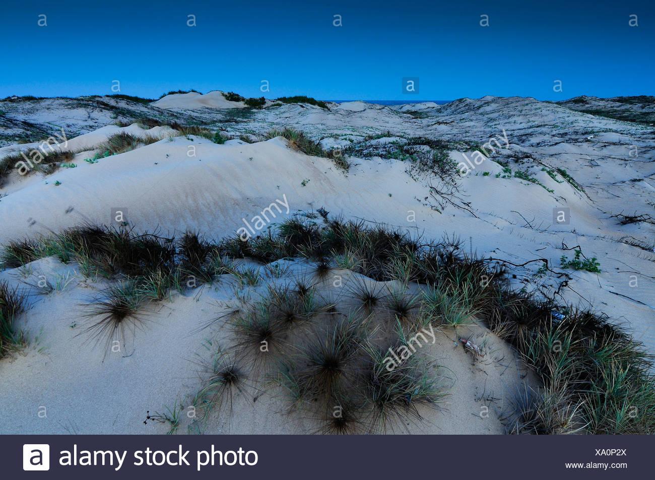 Moonlit dunes, Ke Ga, Vietnam, Asia - Stock Image