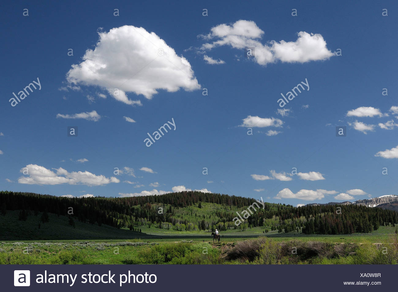 Guest's Horseback riding Flying A Ranch Guest Ranch Bondurant Wyoming USA hills forest - Stock Image