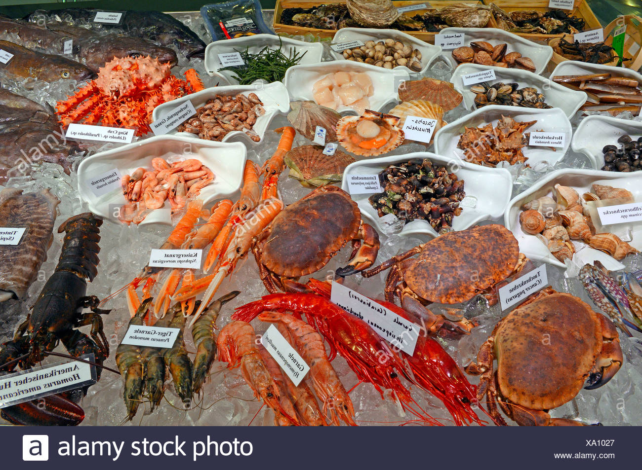 Several kind of exotic seafood, Lobster, snails, crabs - Stock Image